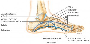 Arches-of-foot